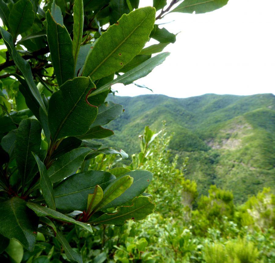 Foto Proyecto Laurel